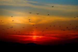 sunset_birds_clouds_213977